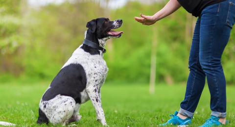 Dogsafe Workplace Training